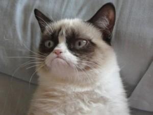 Grumpy-Cat1