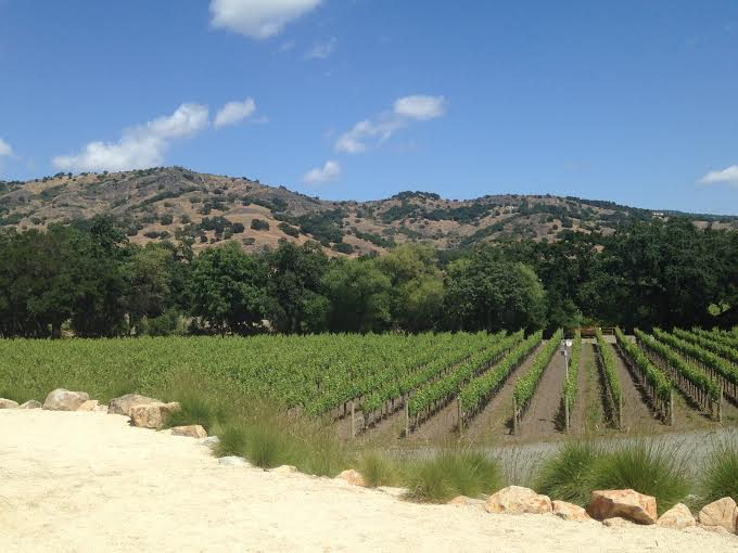 View from Stag's Leap Cellars